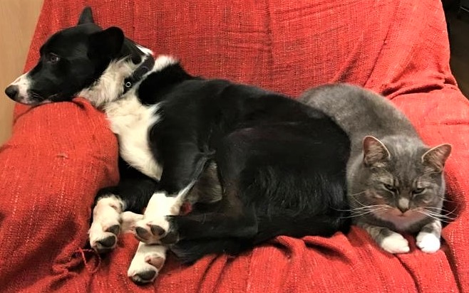 Dog and cat snuggling together on sofa